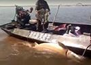 千斤大鳇鱼价值20万