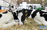 国务院常务会议出台多项措施 加快推进奶业振兴