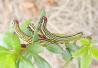 教师致力昆虫调查 近10年晚间灯诱昆虫采10万余件标本