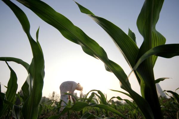 农忙在小暑