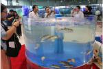 沪上兴起休闲水族产业 年产值达18亿元