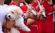 宠物狗伤人频发 多地加强养犬管理:禁养中华田园犬受热议