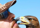 """猎鹰与主人""""接吻"""""""