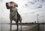 香港第二只狗感染新冠病毒 系全球第二例狗感染个案