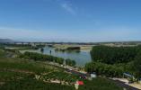 河南三门峡:社科界专家盛赞沿黄百里生态廊道