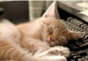 工作日拼命周末睡懒觉要命?睡眠无规律易肥胖
