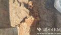 孝南发现新石器时代遗址 距今4500-5200年(图)