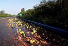 7吨西瓜血流成河