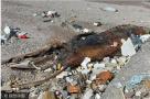 青岛海滩现巨型生物遗骸