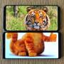 手机与现实巧妙拼合