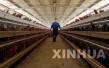 青岛划120个畜禽禁养区 关闭搬迁养殖场120家
