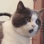 沉迷吸猫欠债70万