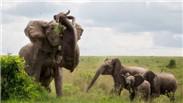 招惹大象 男子被甩飞