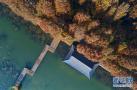 兴化水上森林冬景