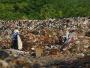 团伙作案非法倾倒3万吨垃圾入长江,江浙两地检方提起公诉