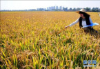 张庆伟:黑龙江要由大粮仓变成绿色厨房