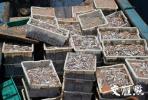 追偿1.3亿!江苏近10年来最大海洋偷捕案今日公诉