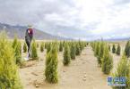 衡水阜城发展经济林产业 推进造林绿化工作