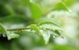 谷雨节气:春天将去,除湿防病