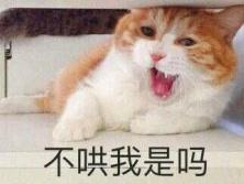这猫表情完全阐释了你的心理