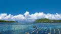 山东海洋强省建设工作会议引发热烈反响 发展海洋产业体系