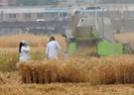 10万一平米的麦田