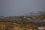 白洋淀新添鸟类11种 数据将不断刷新