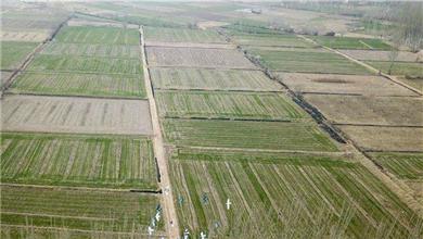 农业农村部:今年将深入推进种植结构调整