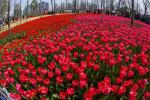 浙江多地官宣入春!春的萌动你感受到了吗?