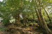 京津冀古树名木保护专家委员会成立 共21名行业专家