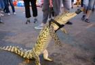 炸串摊主街头遛鳄鱼