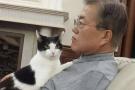 韩国总统文在寅化身猫奴 给喵星人铲屎照曝光