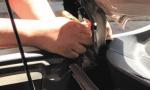 大连街头稀罕事:1米6长棕黑锦蛇爬进越野车