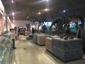 大连自然博物馆里识化石 每块化石都有属于自己的故事