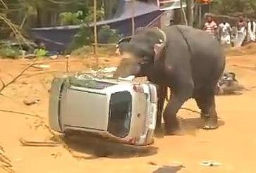 大象掀翻小汽車