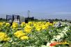 万全大学生村官 建蔬菜基地 助农民增收