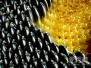 葵花籽是坚果 葵花籽的功效与作用