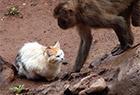 滇动物园猴山遭鼠灾