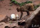 """动物园猴山现鼠患 最后""""猫保安""""来灭鼠"""