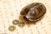 公园内海龟误吞硬币死亡 或因游客撒币祈福