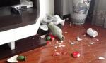 吉林松原今晚有七级地震?地震局这样回应