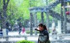 哈尔滨雨后天晴漫天杨柳飞絮 过敏患者增五成