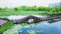 白龟湖国家湿地公园内荷花盛开 垂柳曼舞