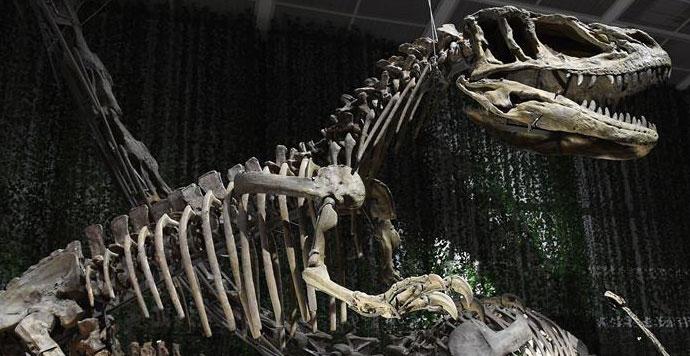 南京博物院举办恐龙主题展