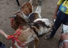 印度宰牲节人满为患