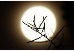 """今年中秋节比去年早了10天 """"皓月顶空照""""美景将现中秋夜"""