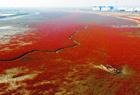 秋日霜烈红海滩