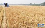 ?粮食安全增强中国特色道路自信