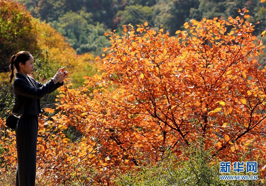 (环境)(6)红叶漫山秋意浓
