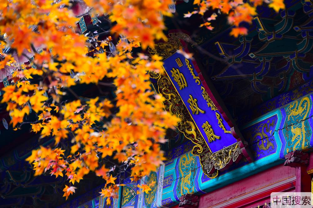 遇见北京的别样秋天